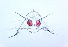 The Death Moth fromHell.