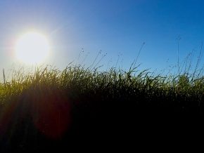 The meaning of free.